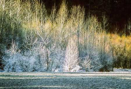 MORNING FROST, YOSEMITE