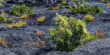 Craters of the Moon 25